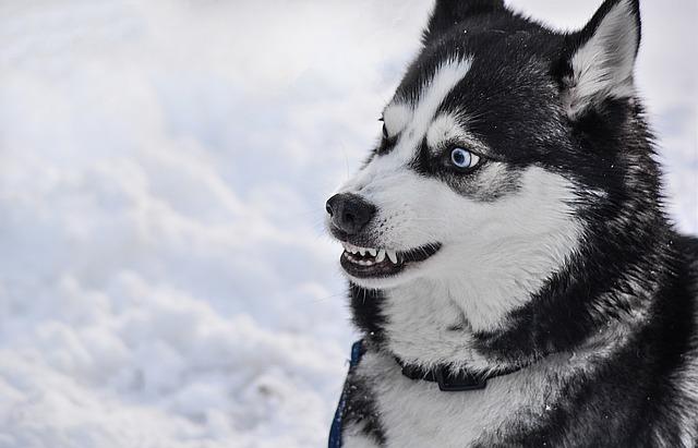 Předejděte tvorbě zubního kamene u vašeho psa!